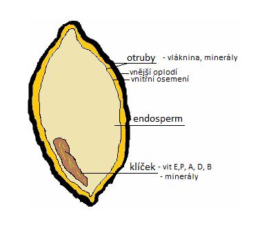 složení obilného zrna